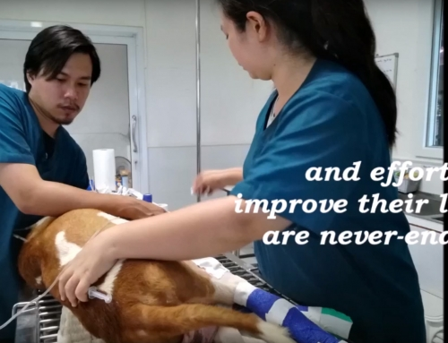 Our Dogs NEED Your HELP! Watch this video from one of our Volunteers